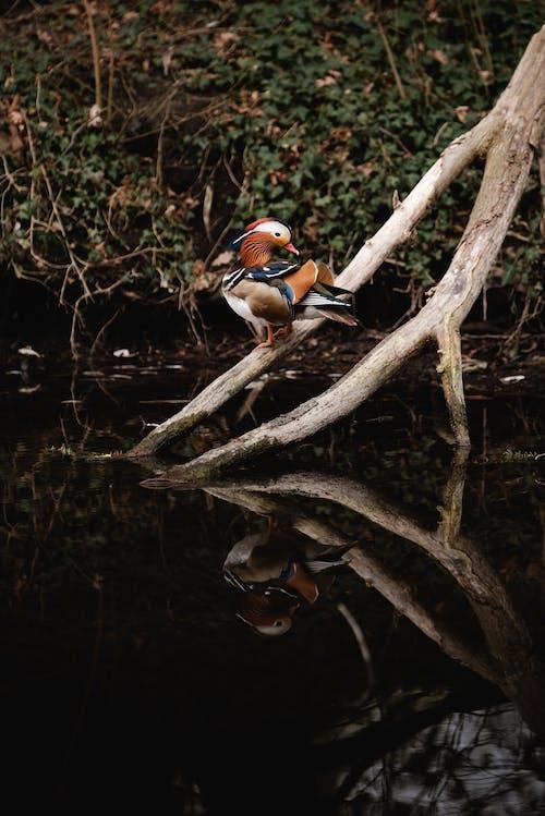 Fotobanka sbezplatnými fotkami na tému bočný pohľad, cicavec, dažďový prales