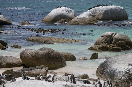 Penguins Resting on Boulders on Seaside