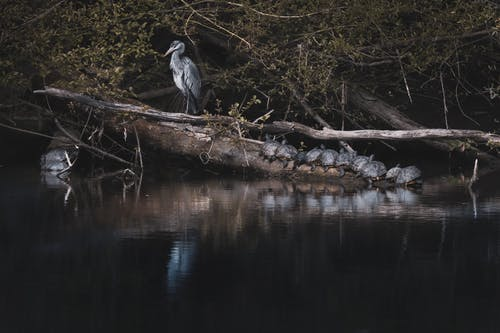 Black and White Bird on Brown Tree Branch Near Body of Water