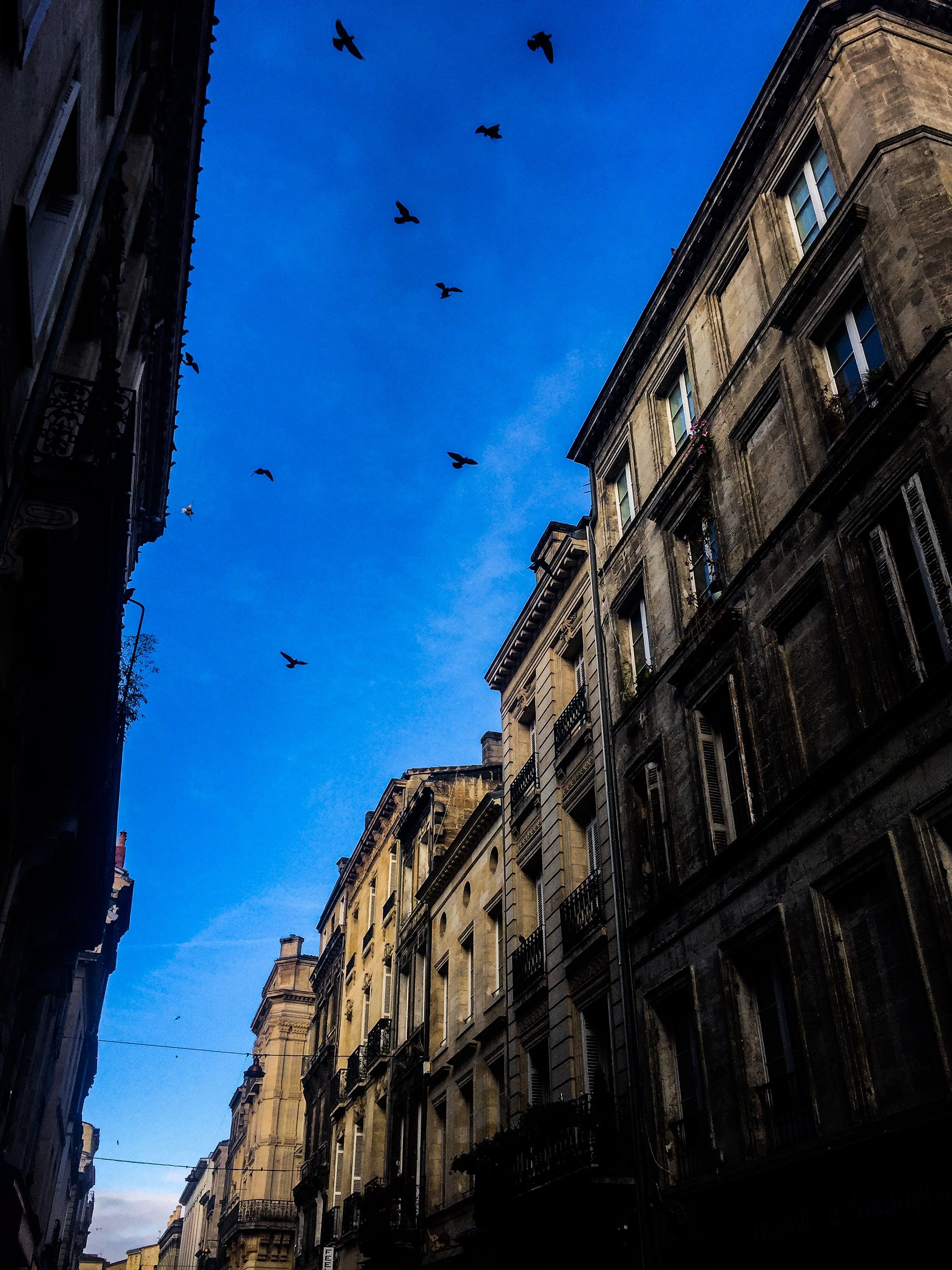 Free stock photo of apartment building, bird, blue sky, city