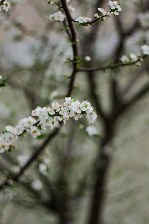 Foto d'estoc gratuïta de a l'aire lliure, amable, angiospermes