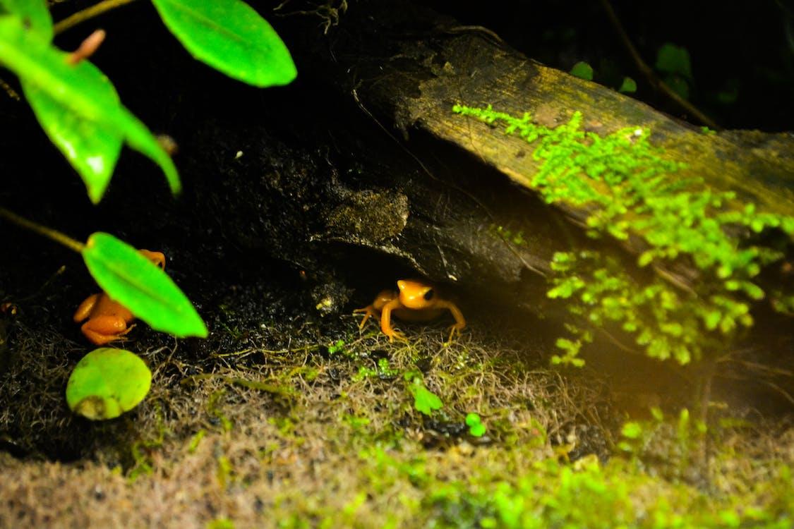Foto d'estoc gratuïta de ample, granota, groc