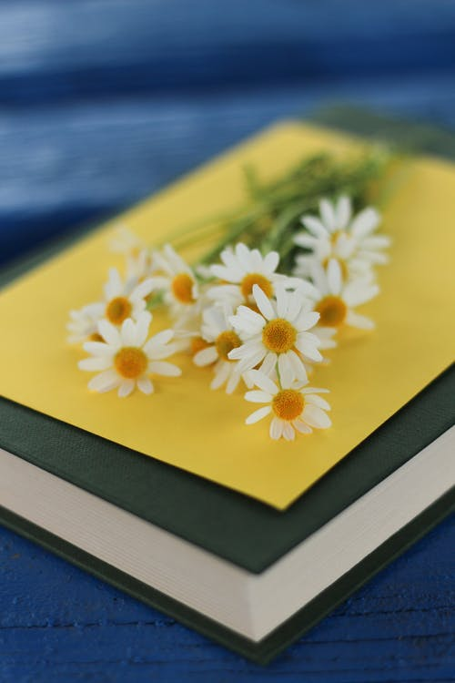 Blooming chamomile bouquet on postcard and book