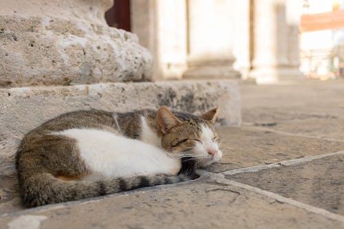 Ảnh lưu trữ miễn phí về con mèo, ngủ