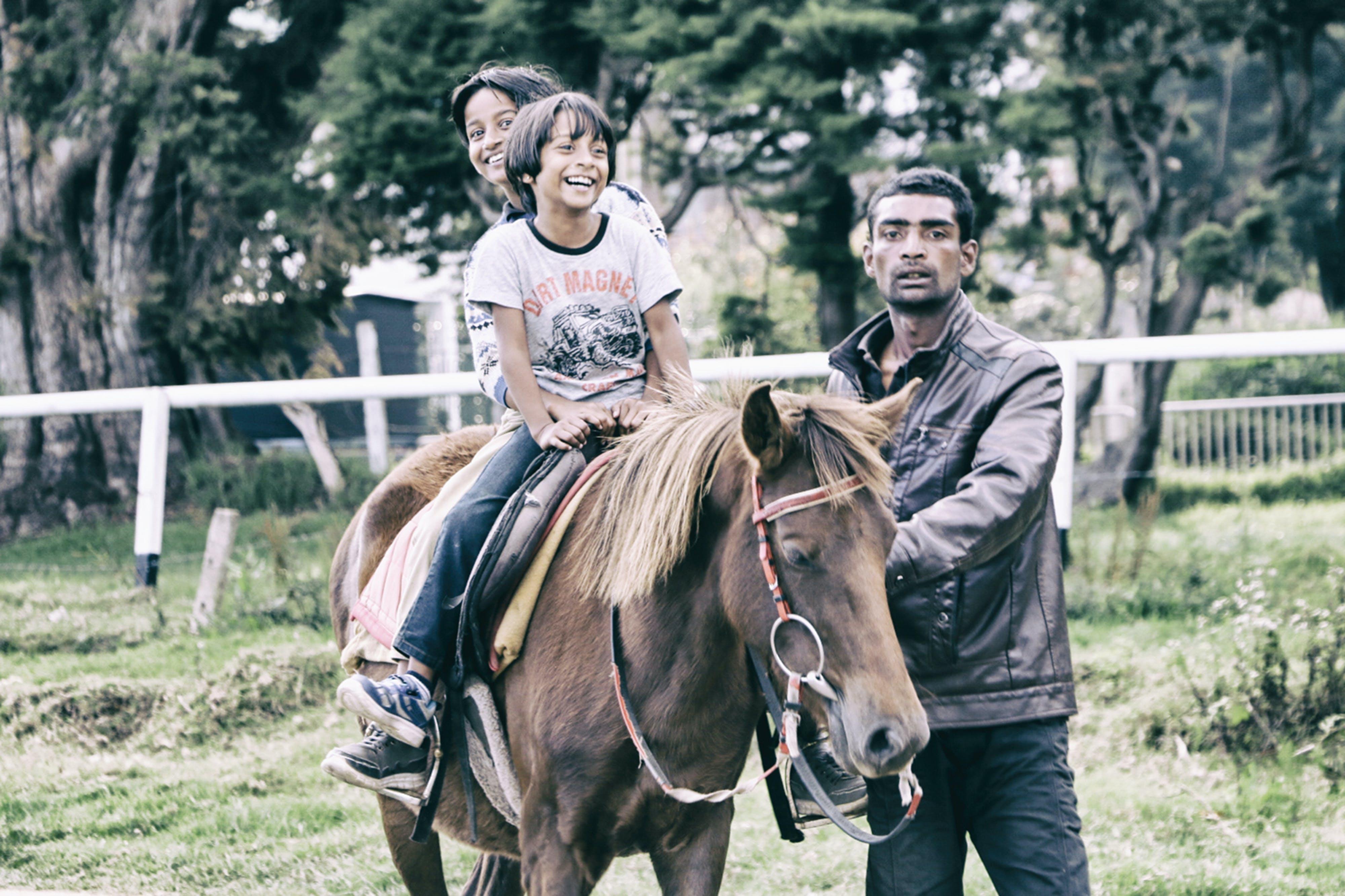 Gratis arkivbilde med barndom, dagslys, gress, hest