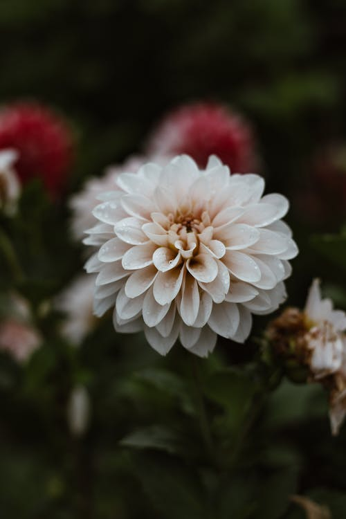 Blossoming white flower with curved tender petals and pleasant aroma growing in daytime on blurred background