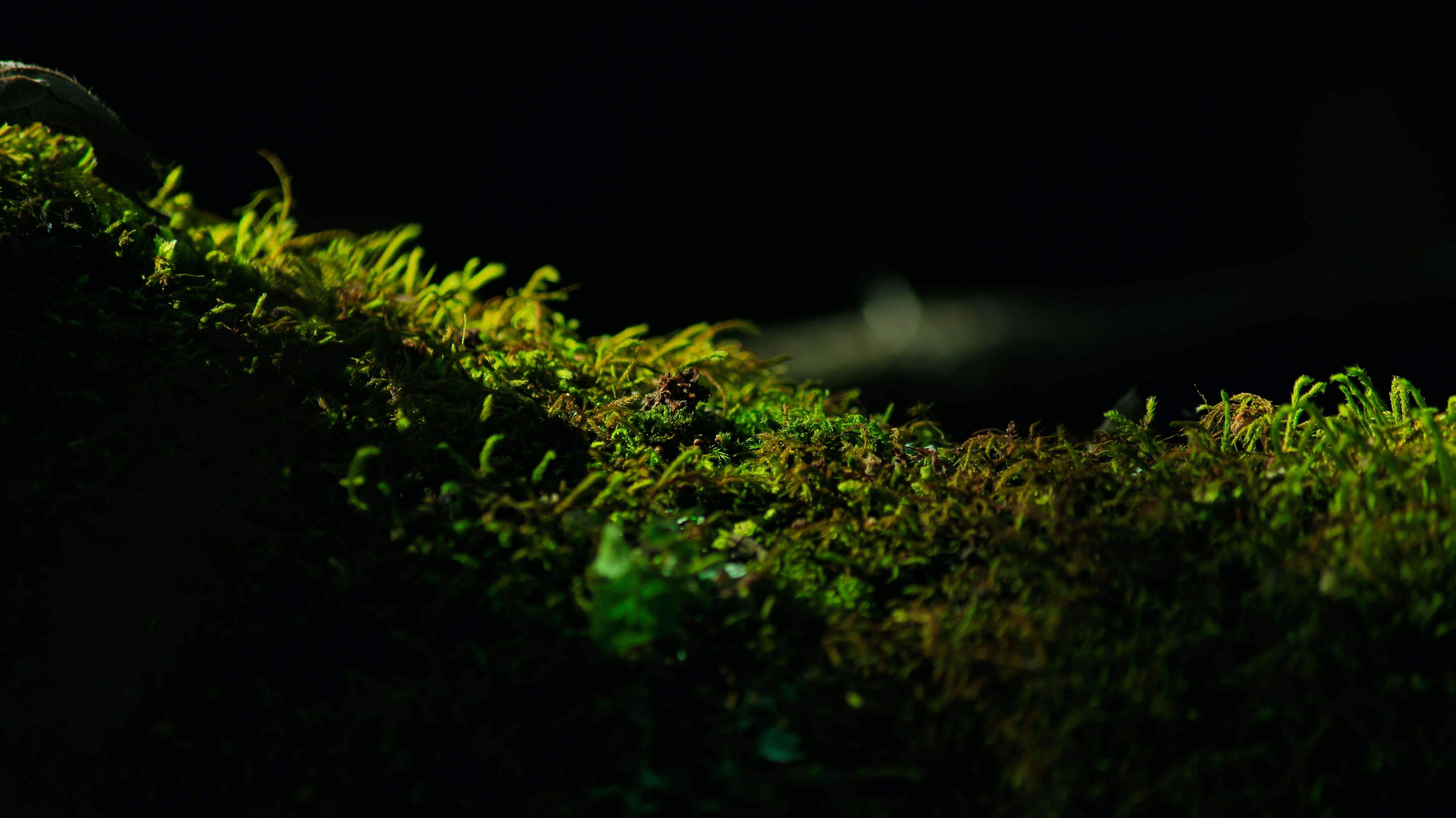 Free stock photo of bright, design, desktop, flora