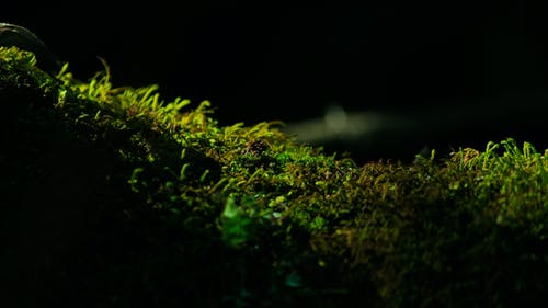 คลังภาพถ่ายฟรี ของ lemna, กลางแจ้ง, การเจริญเติบโต, ธรรมชาติ