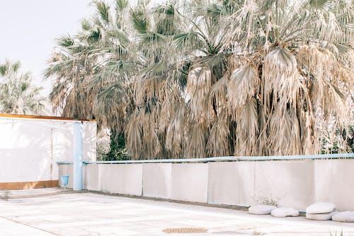 คลังภาพถ่ายฟรี ของ กลางวัน, กลางแจ้ง, กั้นรั้ว, ต้นปาล์ม