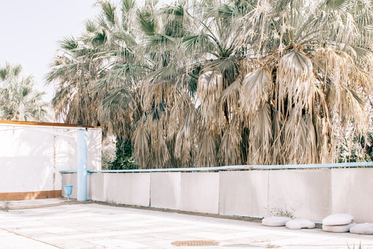 Photography of Palm Tree Beside White Fence