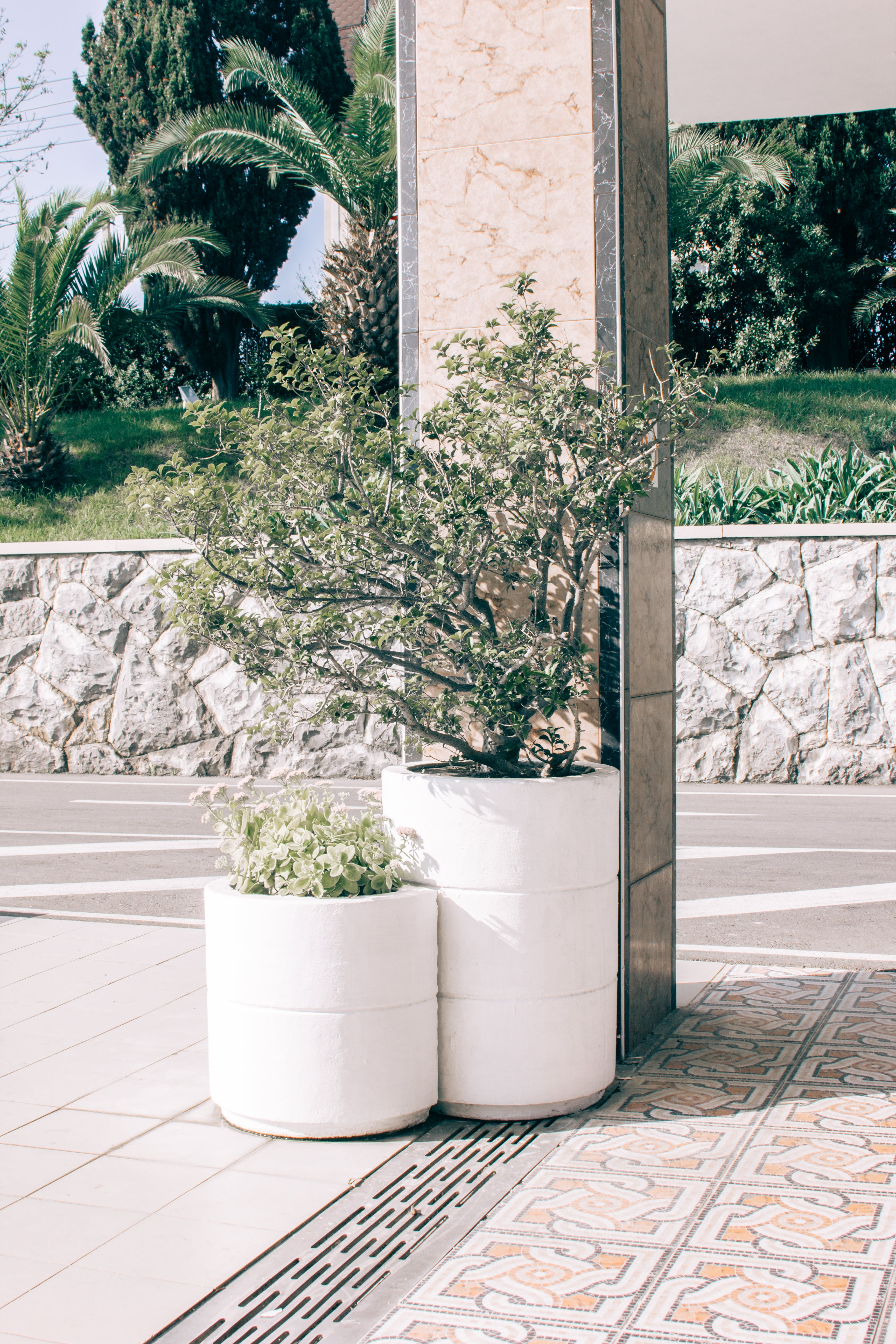 Two Green Potted Plants