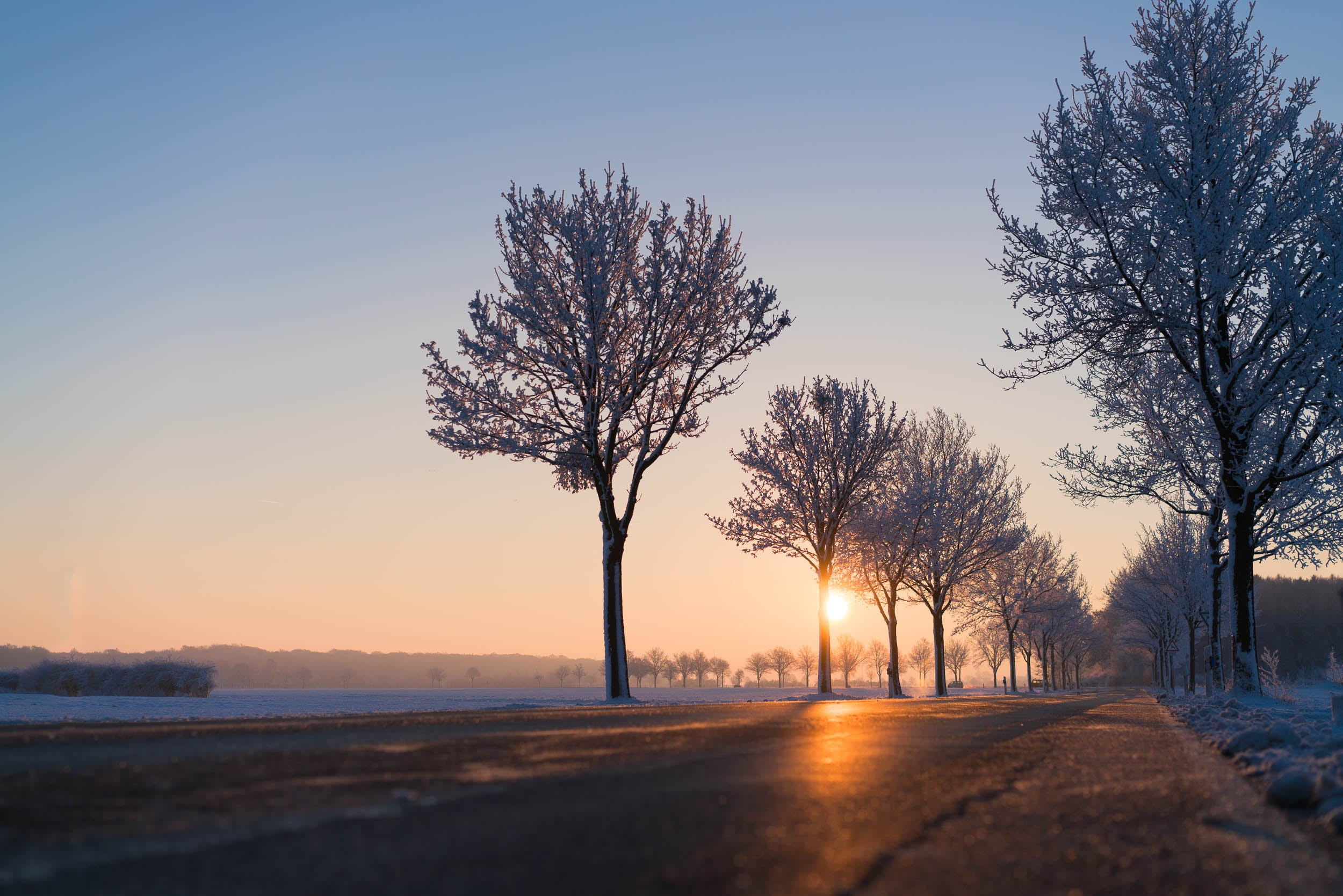 Low Angle View Photo of Concrete Road Between Trees Beside Body of Water during Sunrise