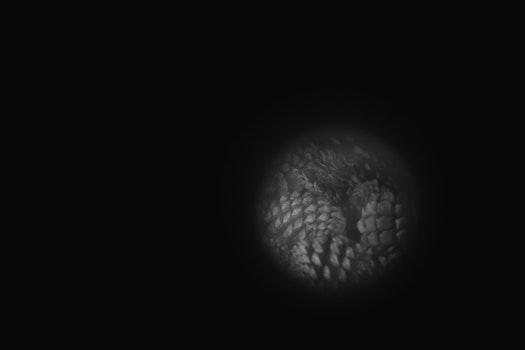 Free stock photo of night, pines, black and-white