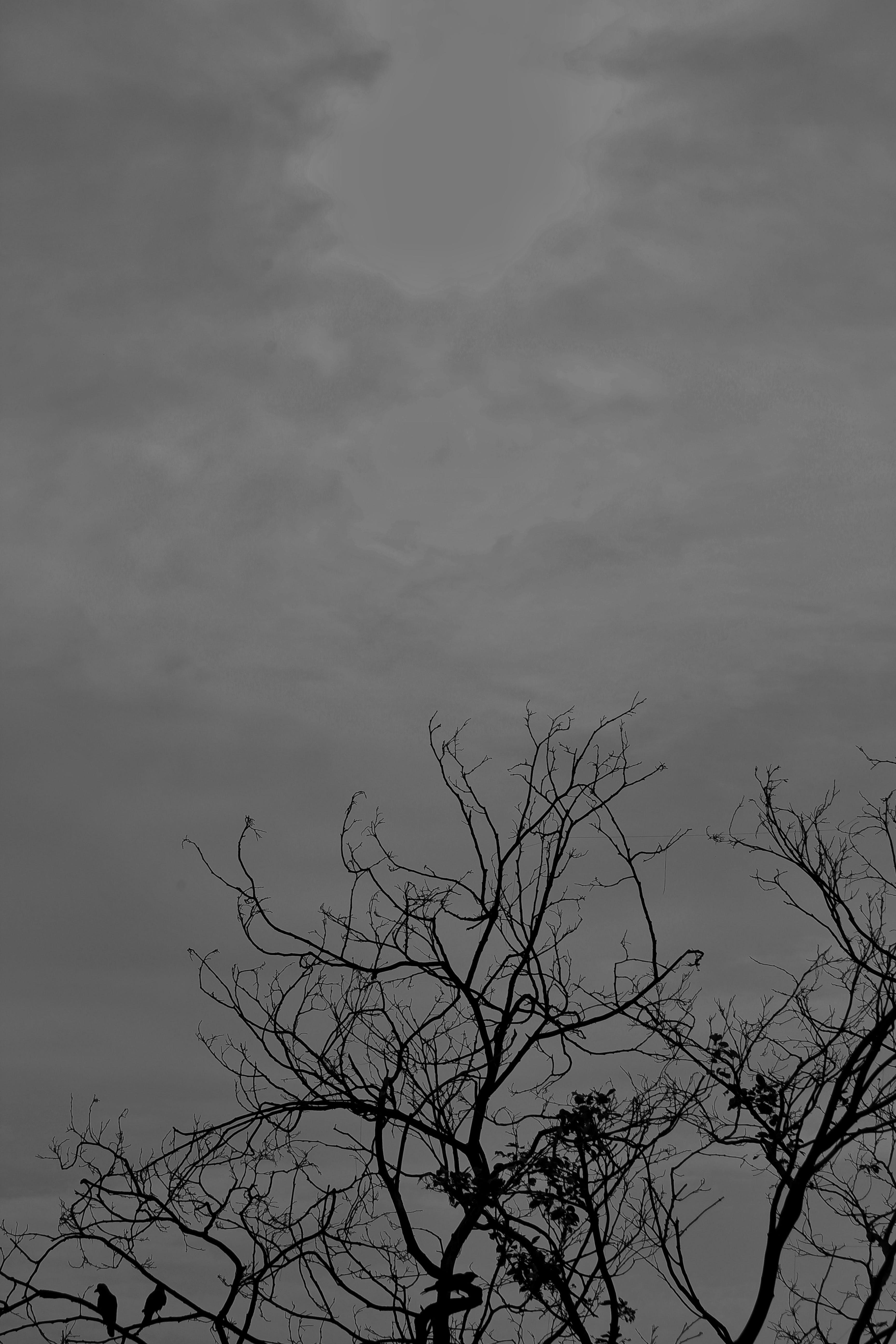 Kostnadsfri bild av svartvitt