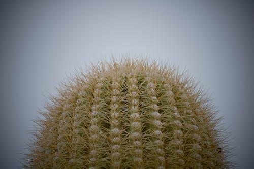 Free stock photo of adventure, cactus, cloud