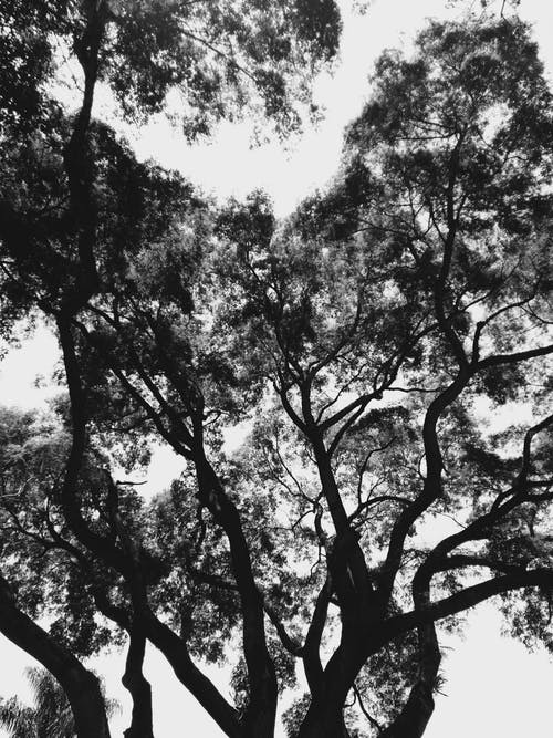 Grayscale Photo of Tree Under Cloudy Sky