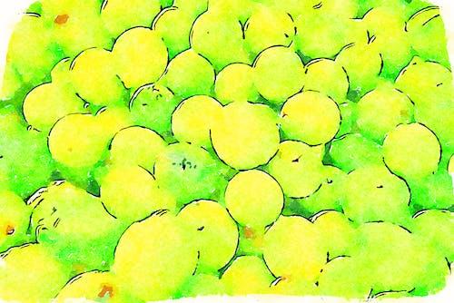 Free stock photo of citrus, lemons, summer