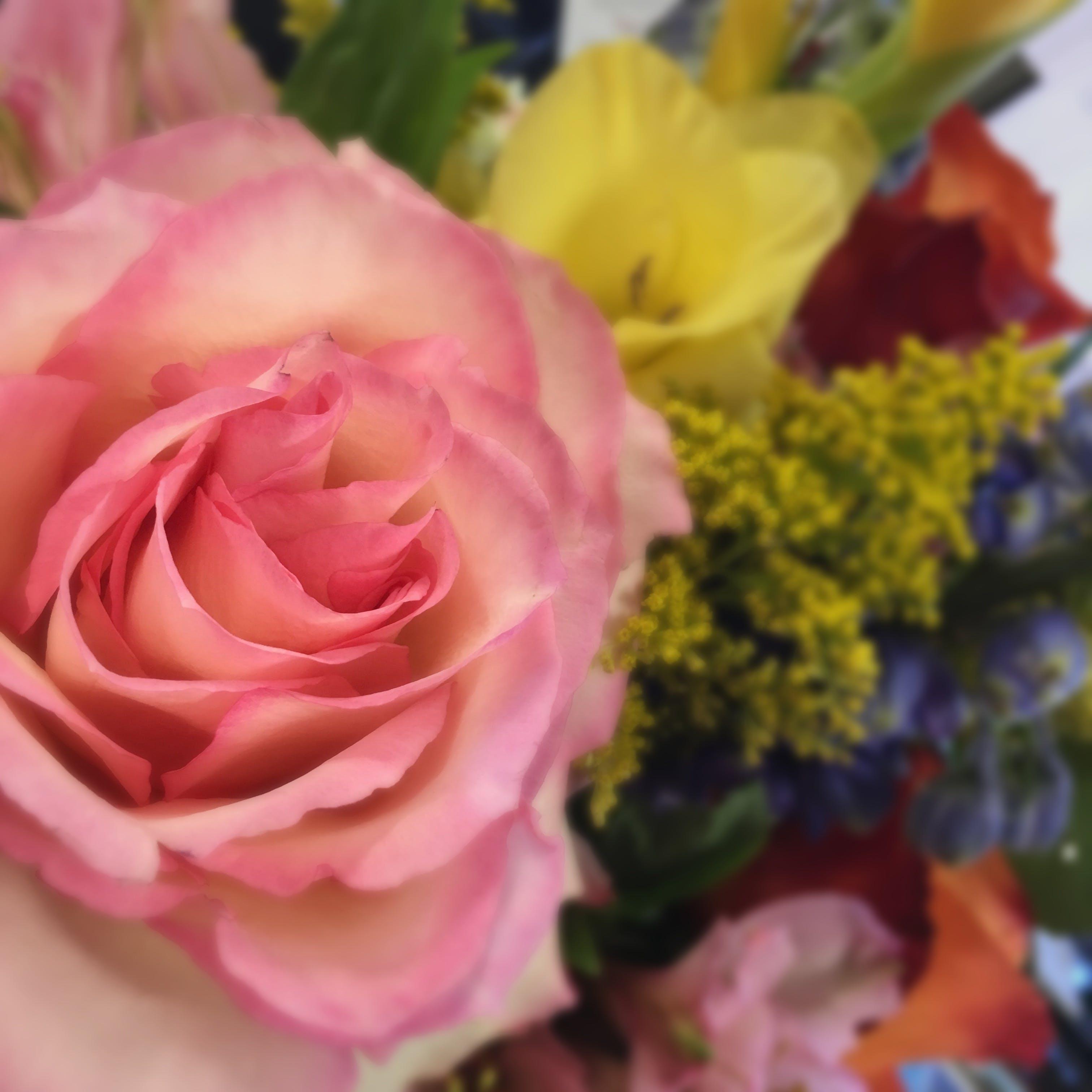Free stock photo of flowers, flower, beauty, beautiful