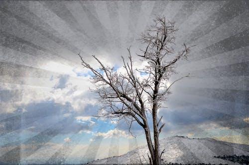 광선, 구름, 눈, 하늘의 무료 스톡 사진