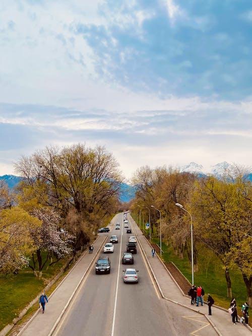Foto d'estoc gratuïta de almaty, bell paisatge, caure