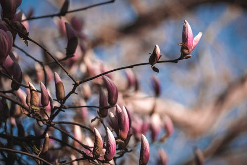 Fotos de stock gratuitas de al aire libre, árbol, brillante