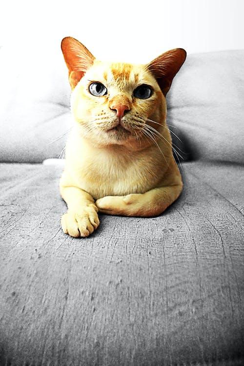 tomcat的, 動物, 可愛, 可愛的 的 免费素材照片
