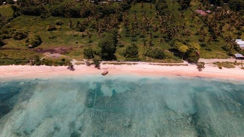 Photos gratuites de arbre, bali, bord de mer