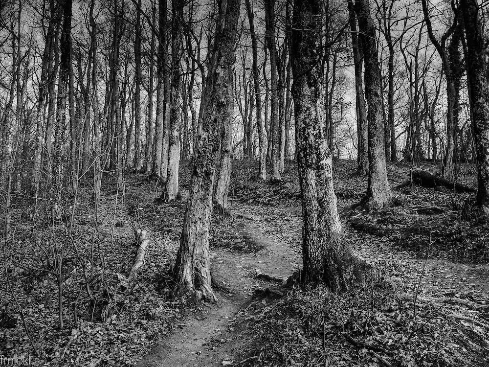 arbres, bois, branches