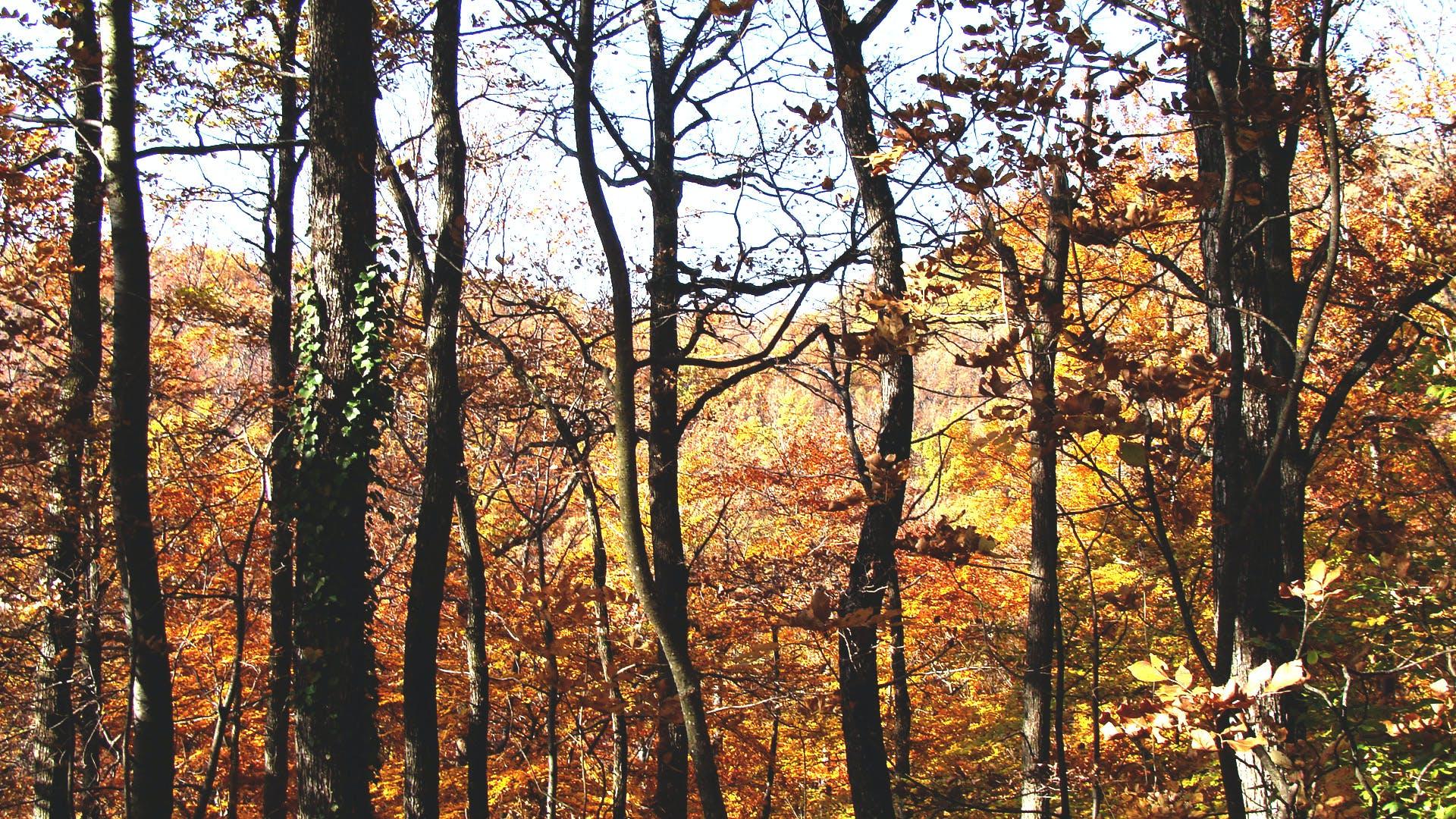 árvores, cena, cenário
