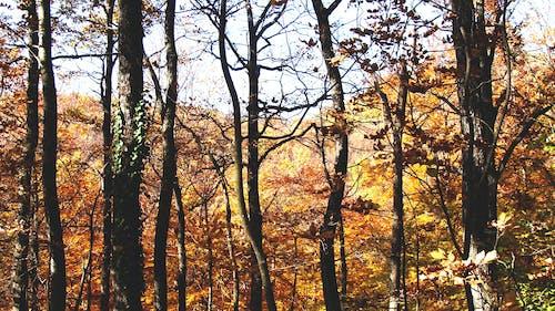 Immagine gratuita di alberi, ambiente, boschi, campagna