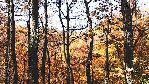 Kostenloses Stock Foto zu landschaft, natur, wald, bäume