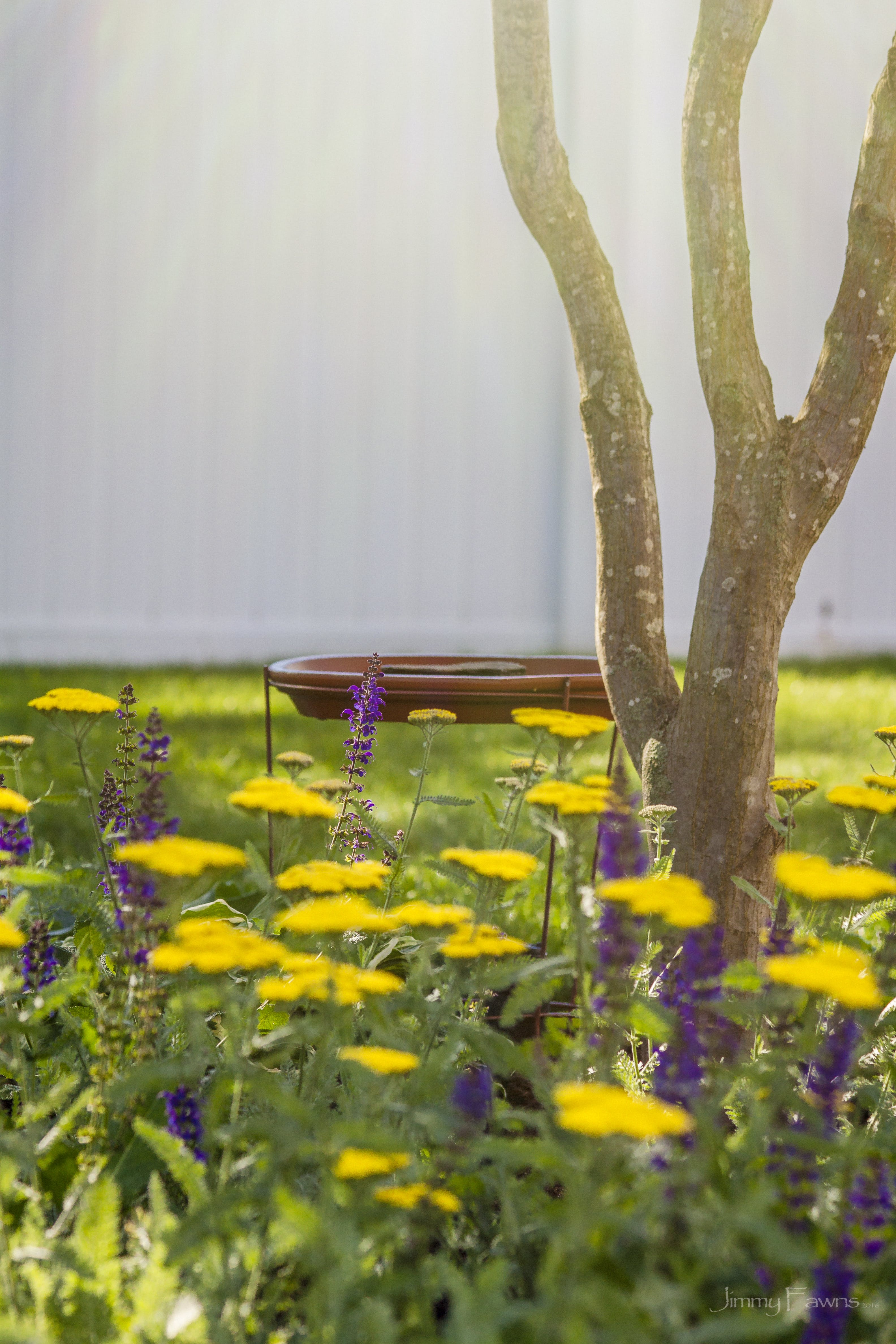 Free stock photo of flower garden
