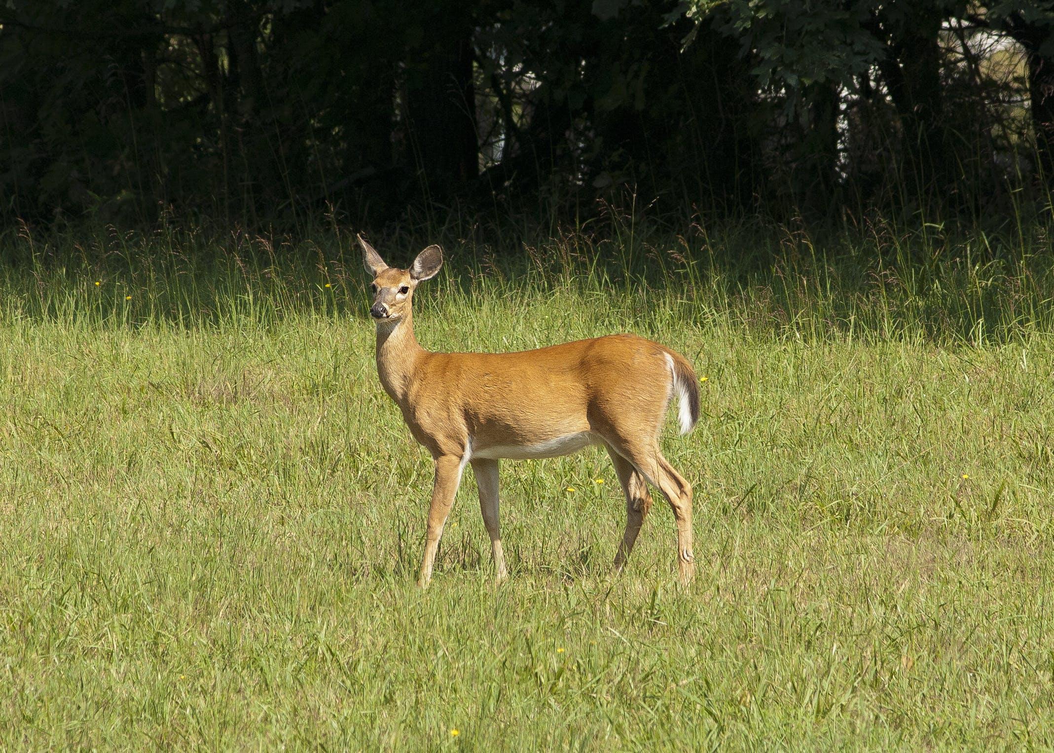 공원, 동물, 동물 사진, 들판의 무료 스톡 사진