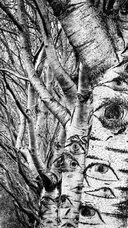 Immagine gratuita di albero, nero, occhi