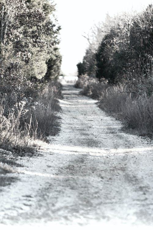 Free stock photo of nature trail