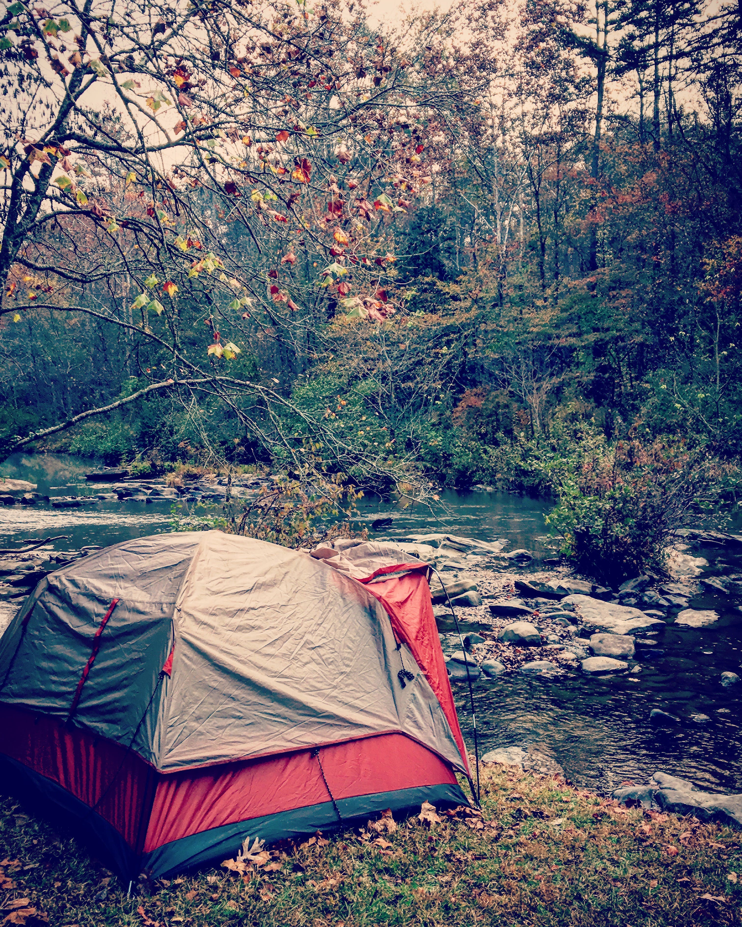 Gray and Red Dome Tent in Forest