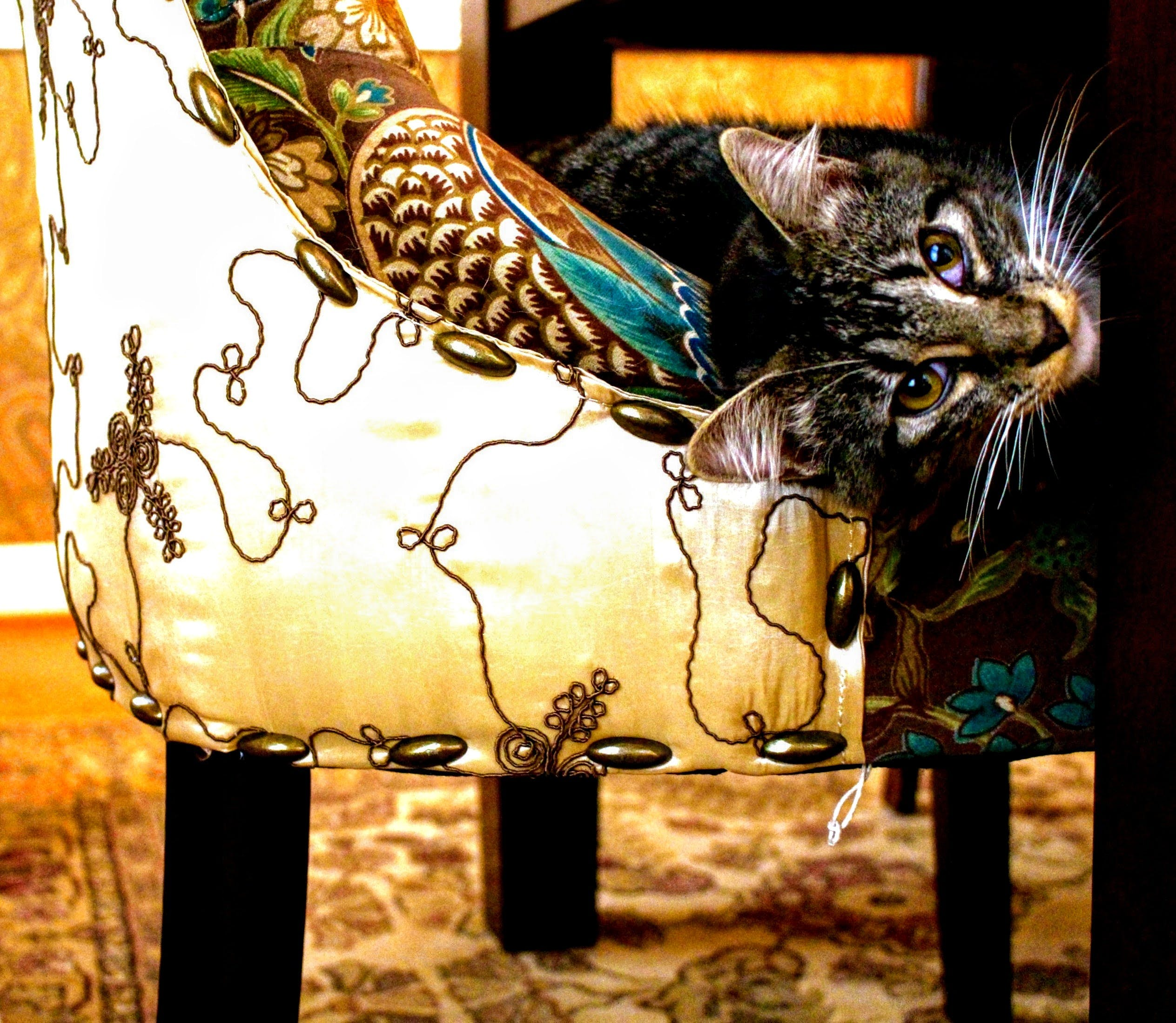 Short-coated Gray Tabby Cat on White and Black Floral Swoop Chair