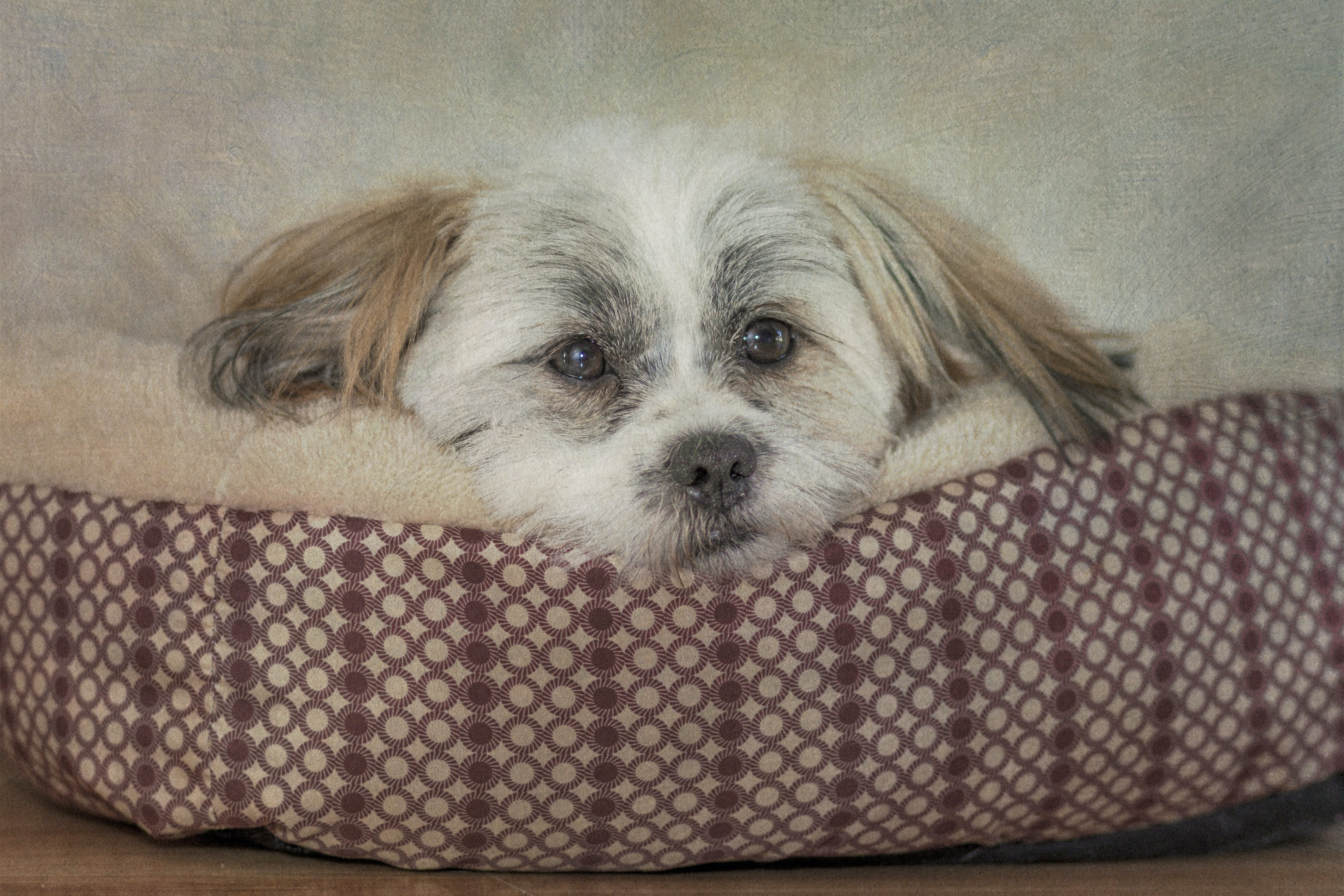 Free stock photo of puppy dog