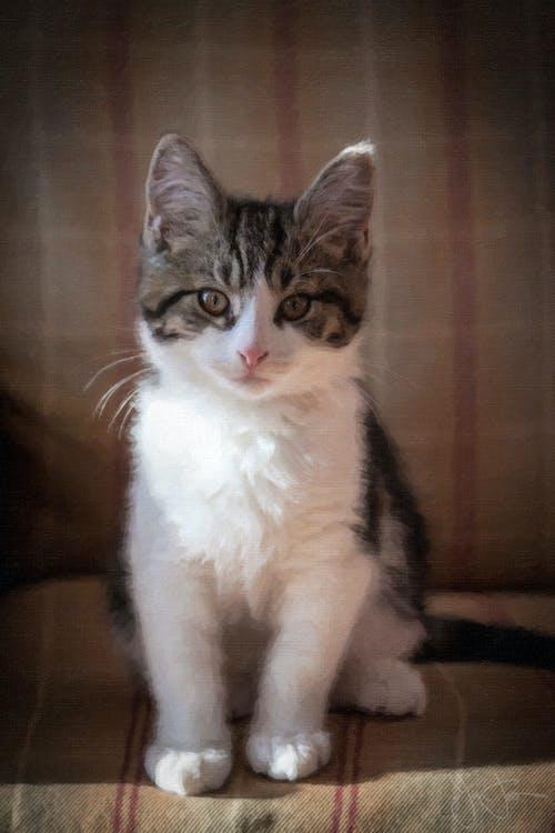 Free stock photo of kitten