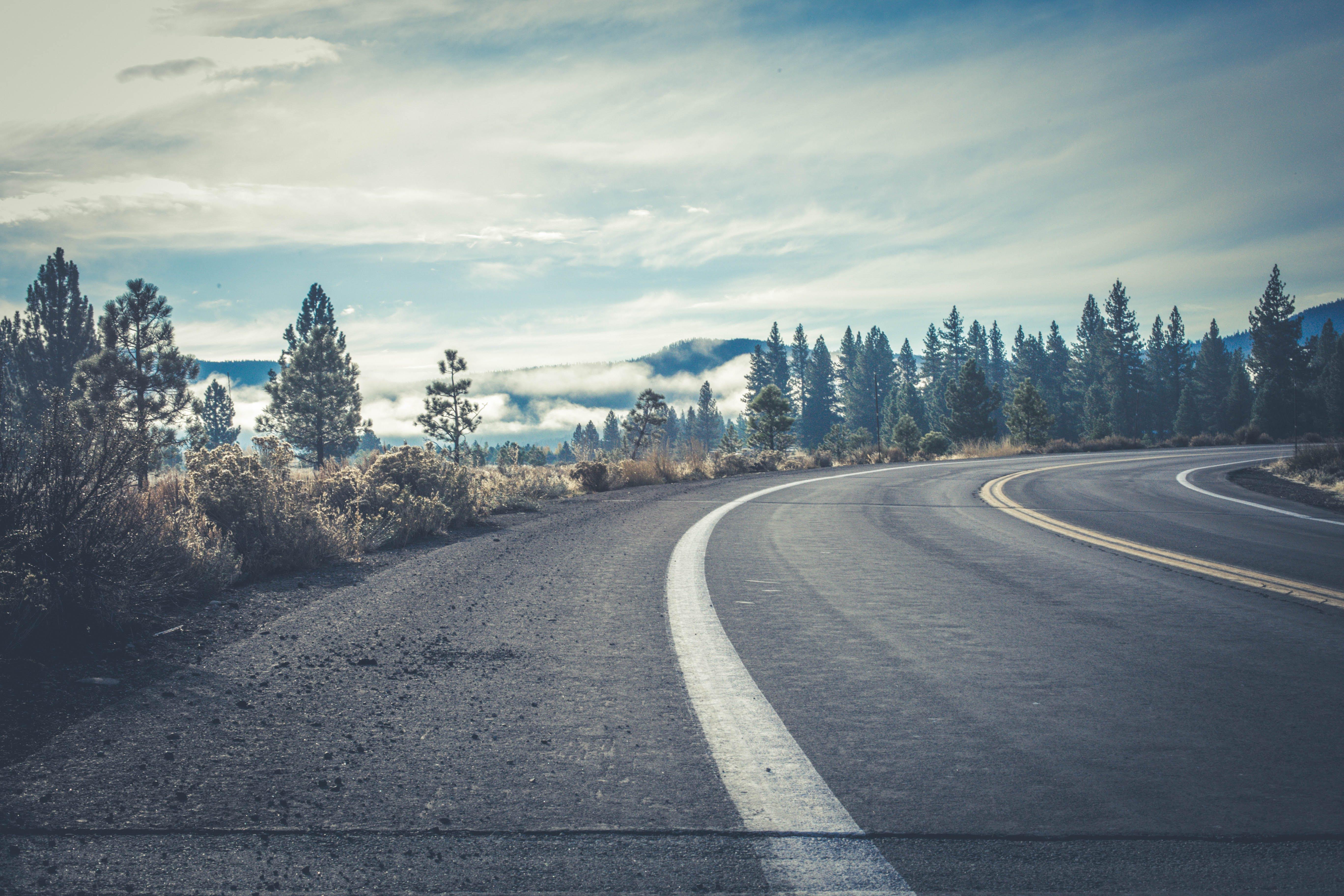 Gray Concrete Road Near Forest