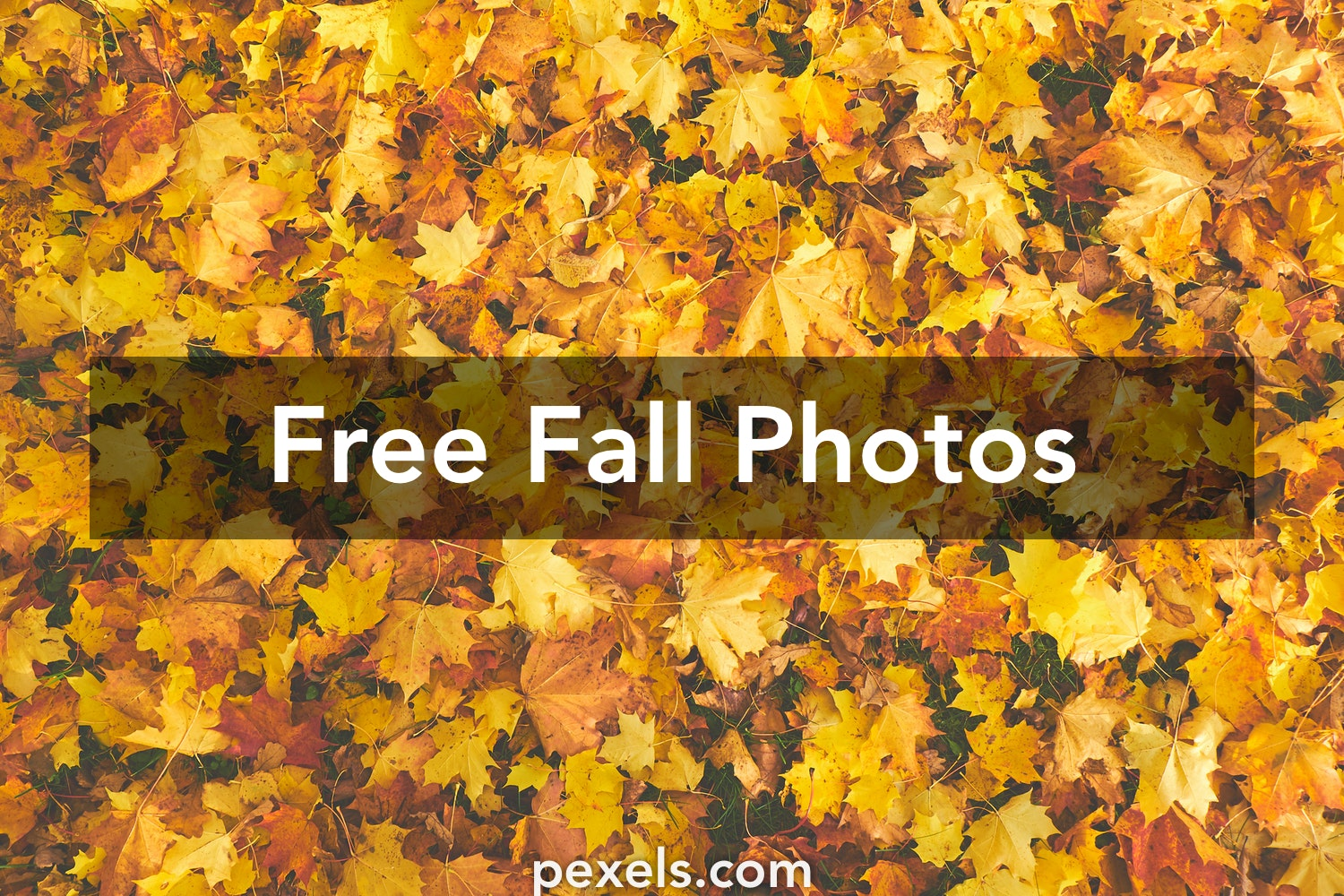 Fall Pictures Pexels Free Stock Photos