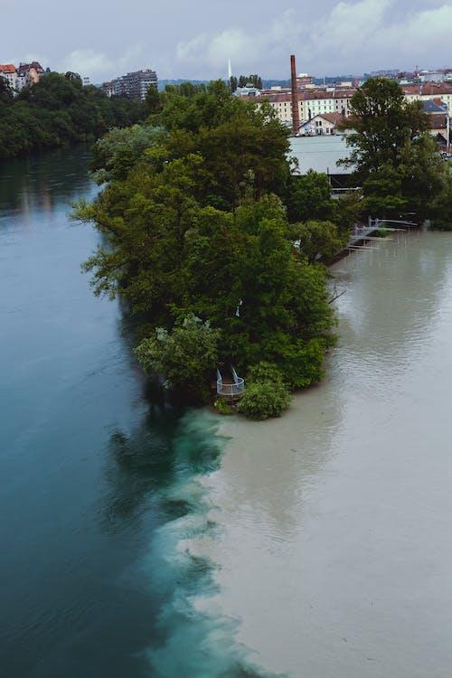 arboles, cruce entreríoy mar, crus entre dos rios 的 免费素材图片