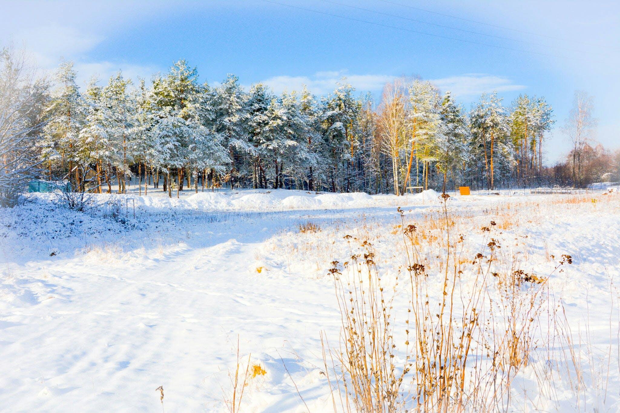 Green Trees on Winter Season