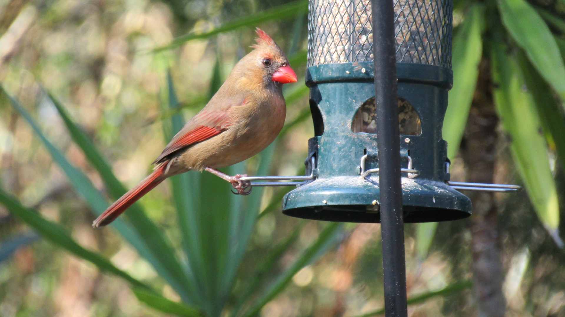 tall bird feeder pole with pulley