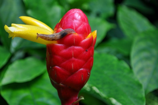 Free stock photo of flower, snail, tropical, bud