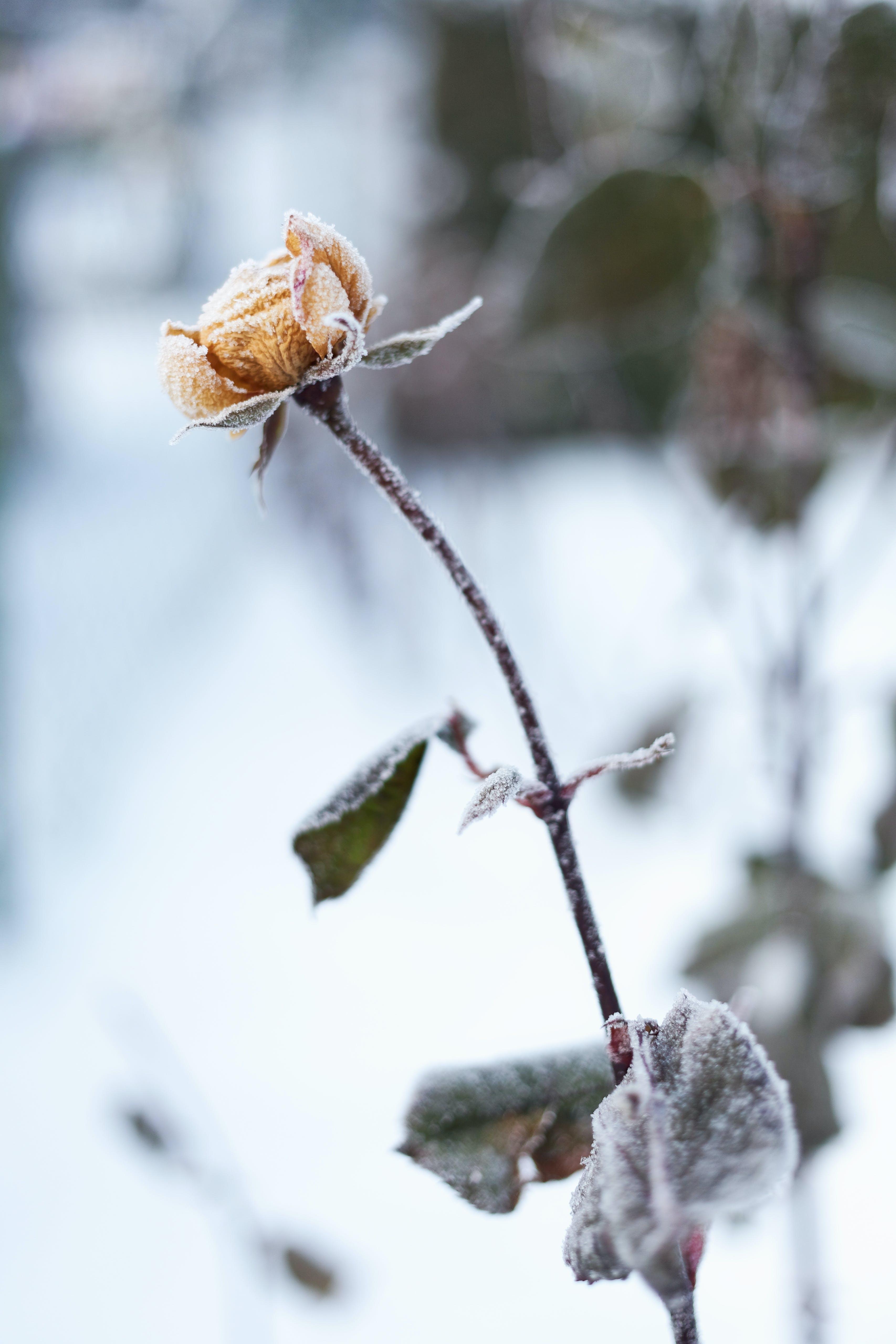 Free stock photo of snow, winter, yellow, frozen
