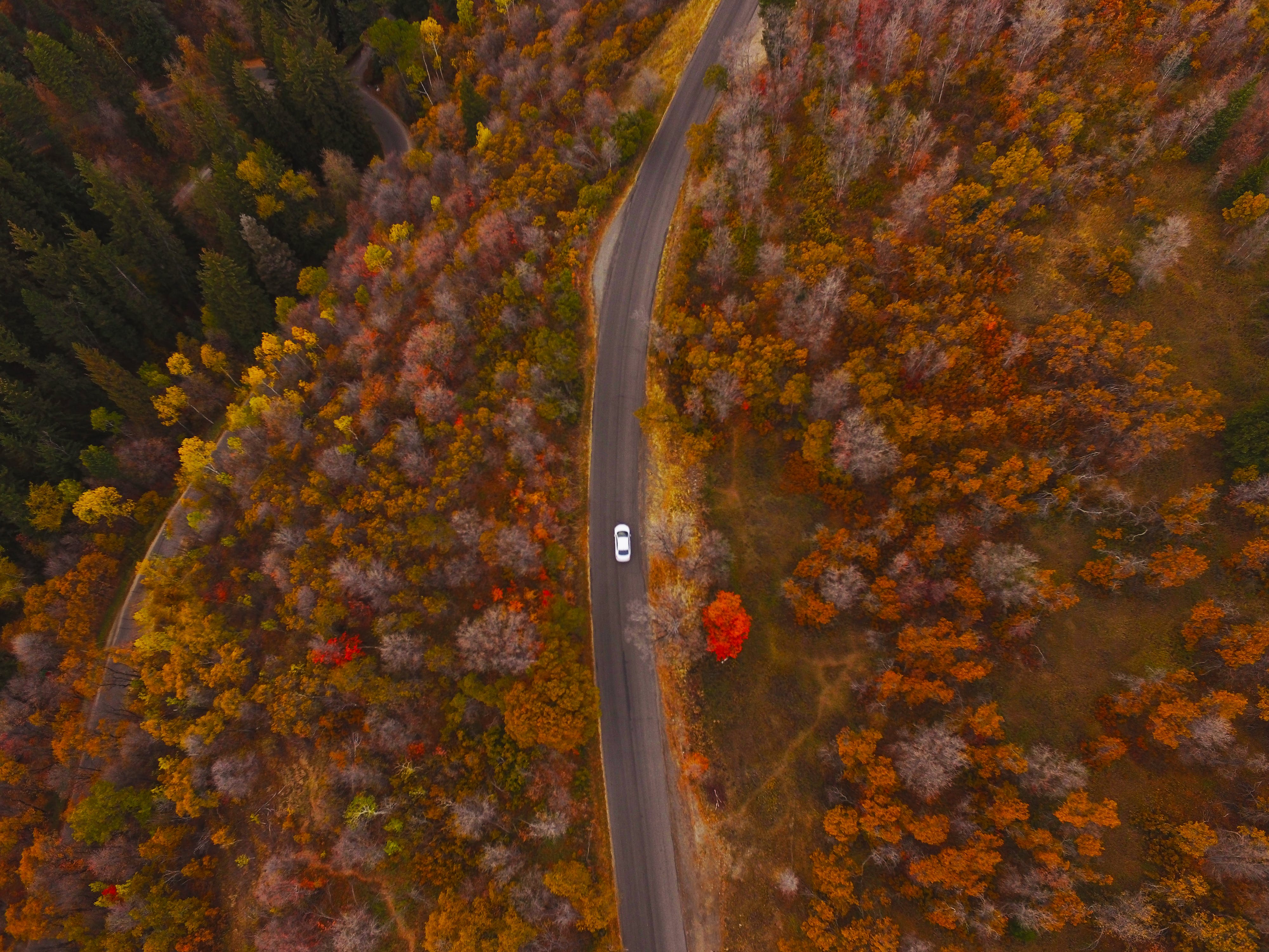 Free stock photo of autumn, autumn colours, autumn leaf, car