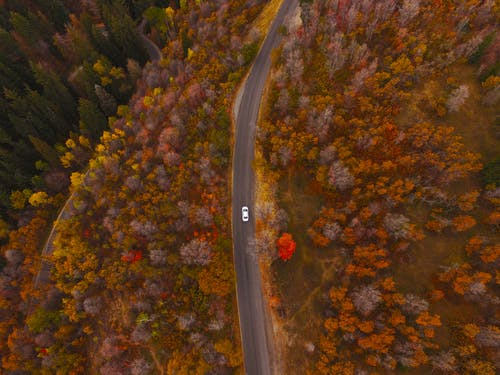 Free stock photo of car, colors, drone