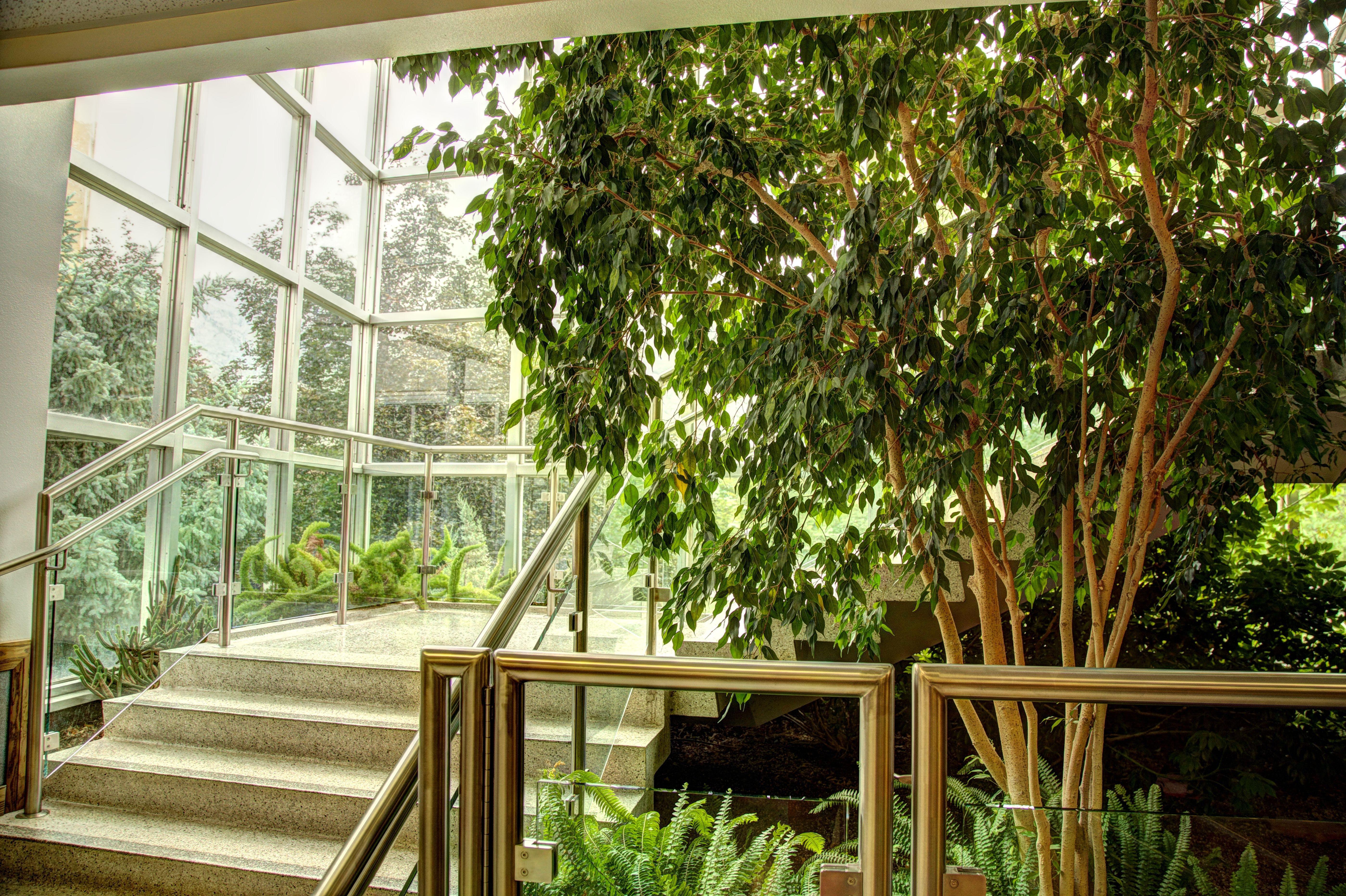 Free stock photo of downstairs, interior decoration, interior design, jungle