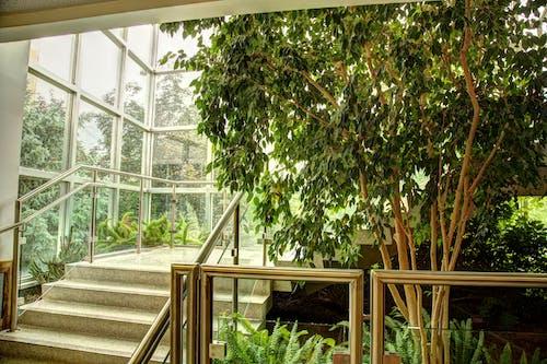 Free stock photo of downstairs, interior decoration, interior design